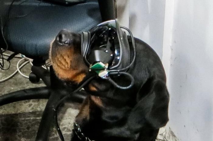 Con estas gafas, el guía de un perro puede darle órdenes direccionales mientras se mantiene a distancia