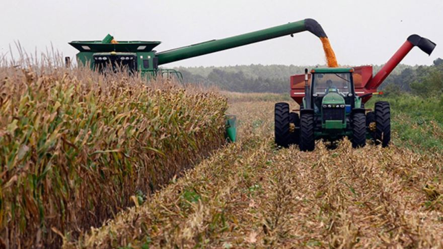 Desde el sector privado informaron sobre la suficiente existencia de maíz para abastecer el mercado interno
