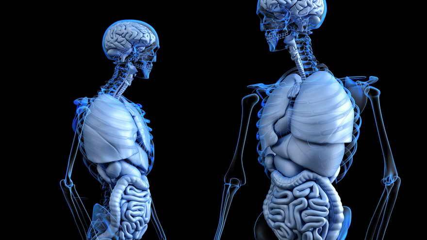 Con futuras técnicas mixtas internas e internas, se podrá imprimir casi cualquier órgano del cuerpo