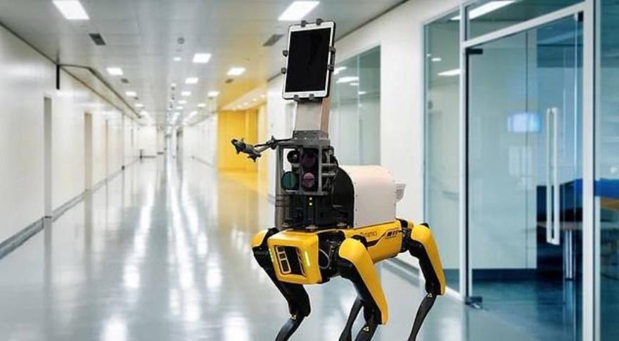 El perro robot trabajando en el hospital