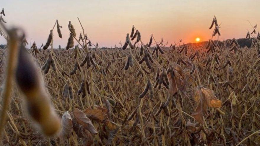 Agrotoken planea tokenizar en el futuro granos de maíz y trigo
