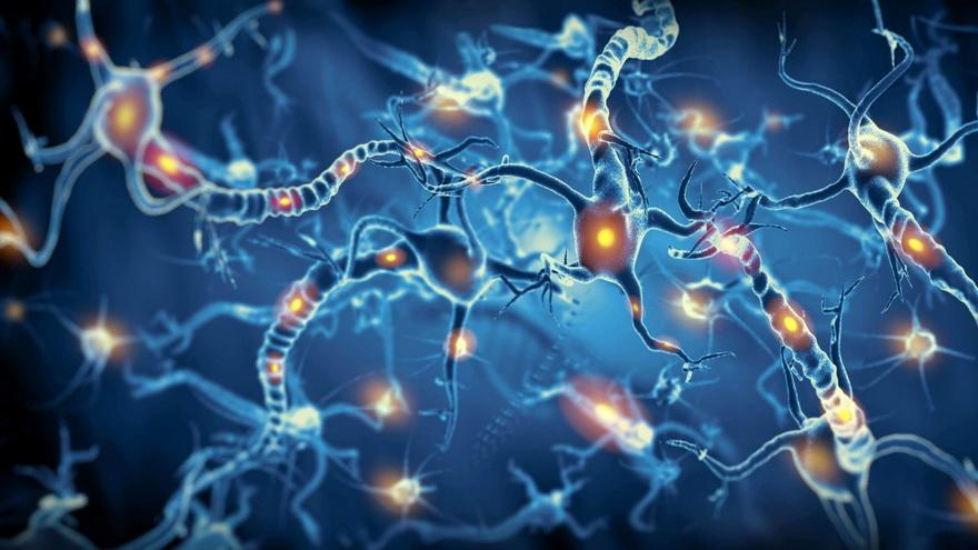 El sistema es tan exacto que puede responder a estímulos producidos por sólo una neurona